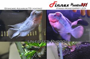 Finnex Monster Ray LED Lighting