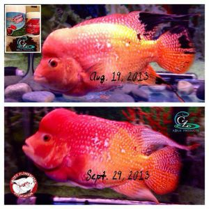 Awesome results from hobbyist using Power Pink and Help for Kok.
