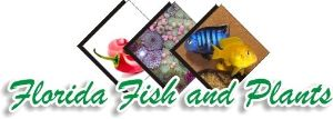 We sell Flowerhorn cichlids