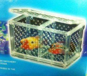 Flowerhorn Spawning Box Cichlid hatchery